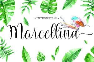 Marcellina Script (60% Off)