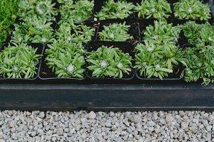 Succulent plants on the floor