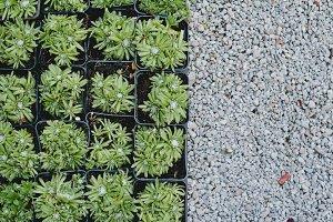 Succulent plants texture