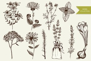 Ink hand drawn herbs illustration