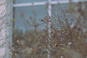 Withered Winter Plants