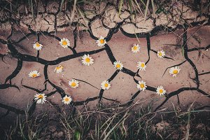 Background with cracked ground