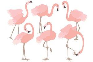 Coral Flamingo Set