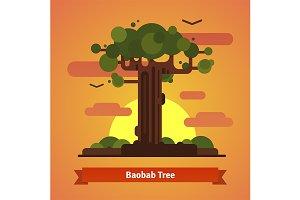 Baobab tree evening sunset scene