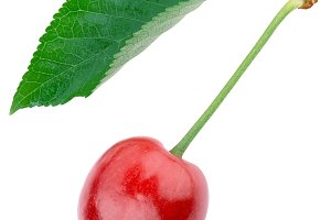 cherry with sheet