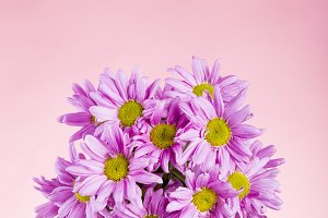 Bouquet of pink daisies