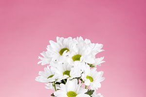 Bouquet of daisies on pink background