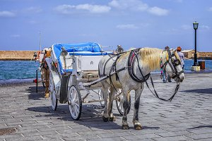 Horse cart for tourists