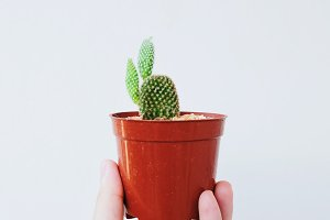 Hand holding small cactus