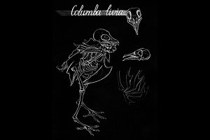 Monochrome dove pigeon skeleton