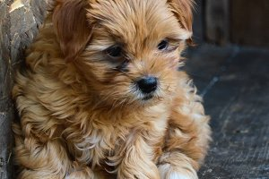Cute little puppy