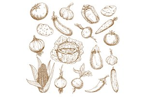 Autumn harvest vegetables sketches
