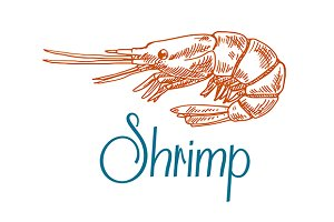 Sketch of sea shrimp or prawn