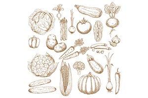 Organically healthy fresh vegetables