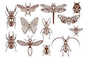Brown tribal insects