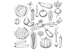 Sketched vegetables set