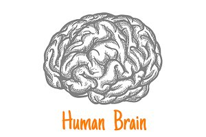 Human brain engraving sketch