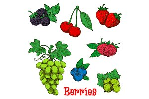 Colorful appetizing berries