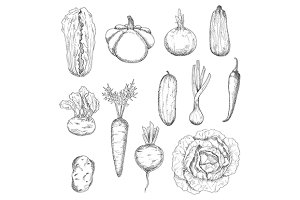 Outline vegetables sketches