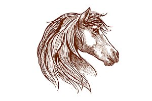 Sketch of wild mare head