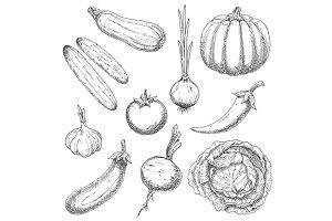 Organically grown farm vegetables