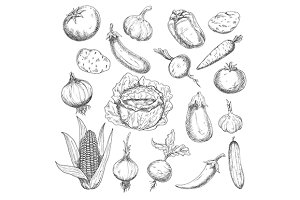 Retro engraved veggies sketches