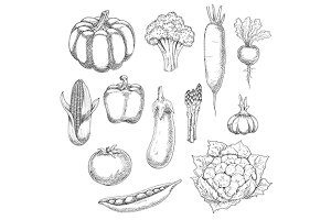 Organic farm vegetables sketches set