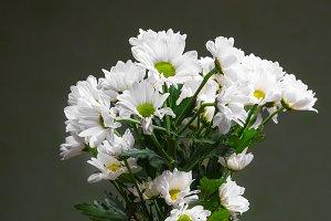 White camomiles in glass jug