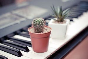 flowerpots on the piano