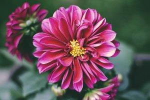 Flower - Matte