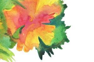 watercolor flower paint