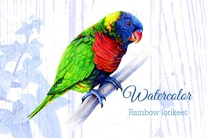 Watercolor Rainbow lorikeet drawing