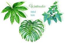 Watercolor tropical leaves drawing