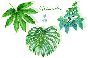 Watercolor tropical leaves drawing