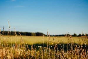 Crop field #2