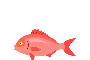 Sea Fish in Pink Color Isolated