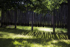 Fence Shadow (landscape)