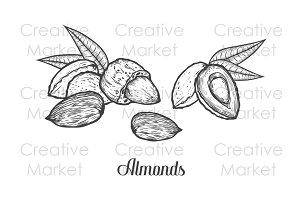 Almonds hand drawn illustrations