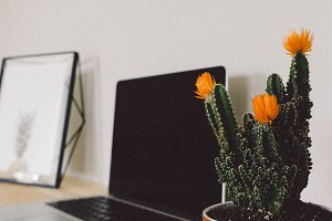 Desktop with Cactus and Frame