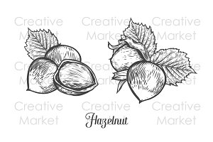 Hazelnut hand drawn illustration set