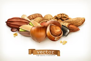 Nuts, vector illustration