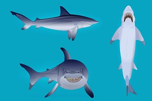 Hungry agressive and scary shark set