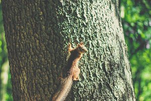 Little Squirrel Climbing the Tree