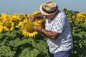 man in hat looking at sunflower