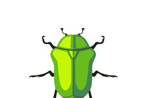 Protaetia May Bug
