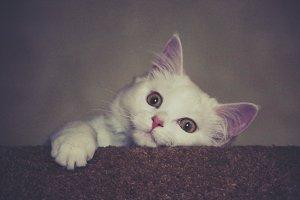Kitty - wild