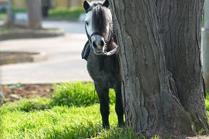 Little horse pony