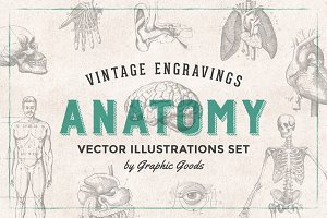 Anatomy Engravings Set