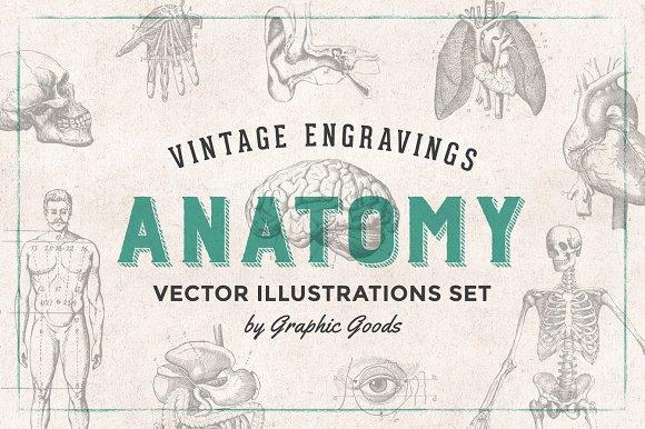 Anatomy Engravings Set