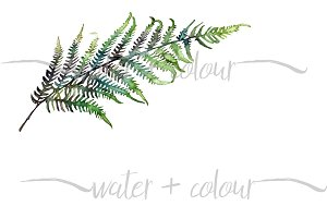 Downloadable watercolor fern border